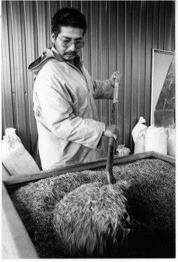 wild rice at Kagiwiosa.jpg
